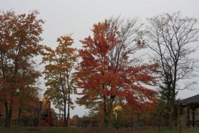 Trees Near the Playground